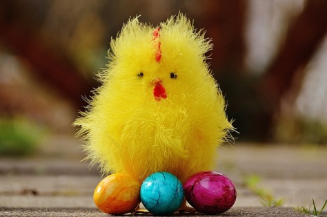 chicks-1236853_640