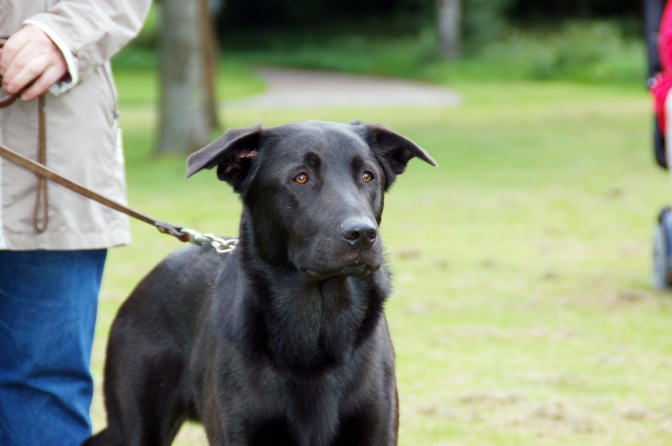 Välkommen på en ny säsong med hundcoachning!