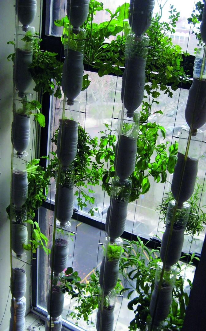 Ett växande intresse – skapa din egen odling utan täppa