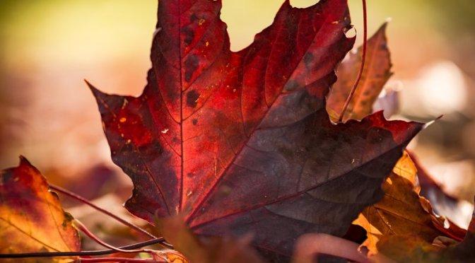 Hösten på Idé A